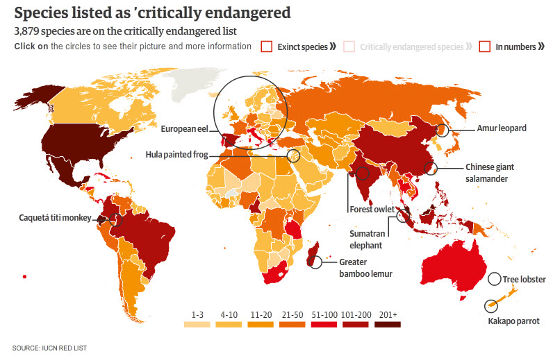 Species listed as critically endangered by IUCN red list (the Guardian)